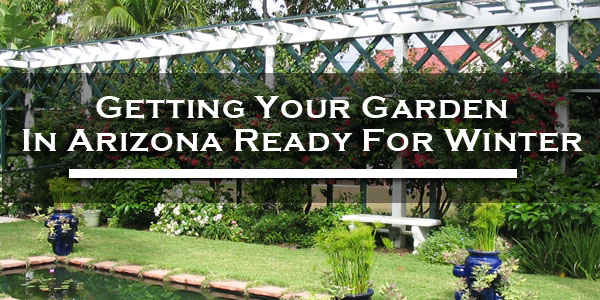 getting your garden in arizona ready for winter
