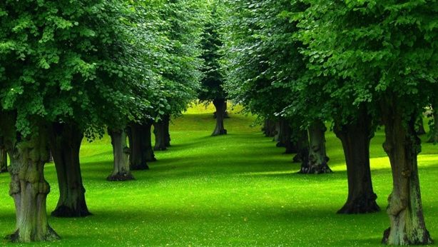 How Trees Actually Produce Oxygen