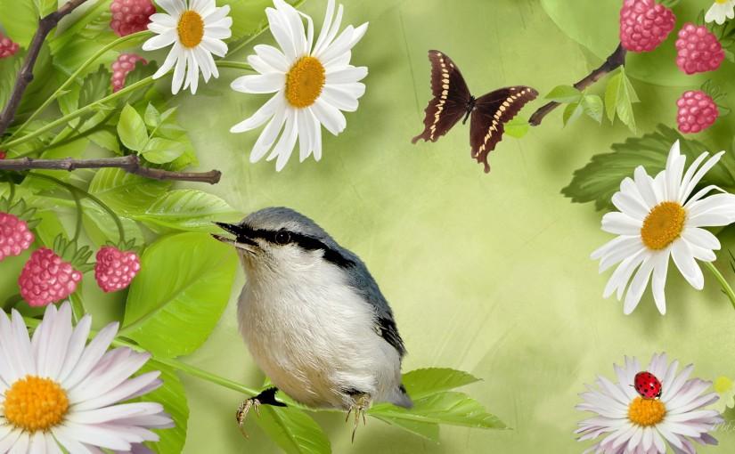 Birds, Butterflies, Garden, A & P Nursery, Gilbert AZ, Arizona