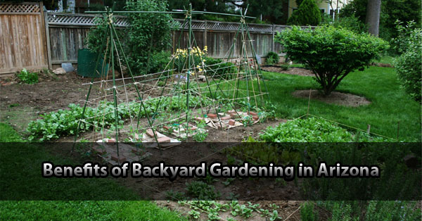 Benefits of Backyard Gardening in Arizona
