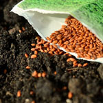 Best seeds for beginner vegetable gardener in Mesa AZ