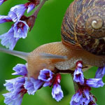 Keeping pests out of your garden in Mesa AZ