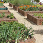 Raised Garden Beds in Mesa