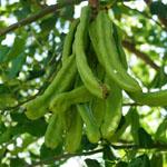 The vegtables that grow best in Mesa AZ