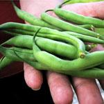 Vegtables that love growing in Arizona Soil