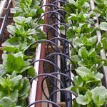 Watering system for vegetable gardens in Mesa AZ