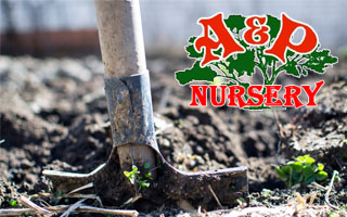 Garden Soil Vs Potting Mix Differences A P Nursery