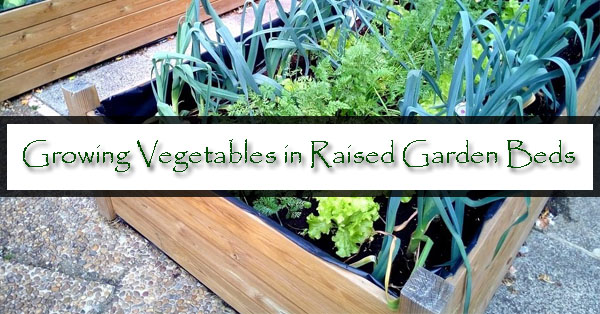 Growing Vegetables in Raised Garden Beds Mesa AZ