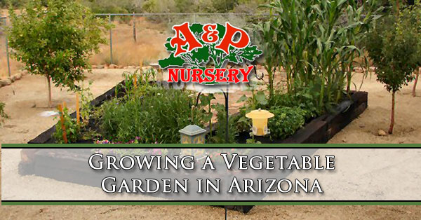 Growing A Vegetable Garden In Arizona A P Nursery