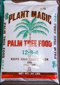 Palm Tree Food