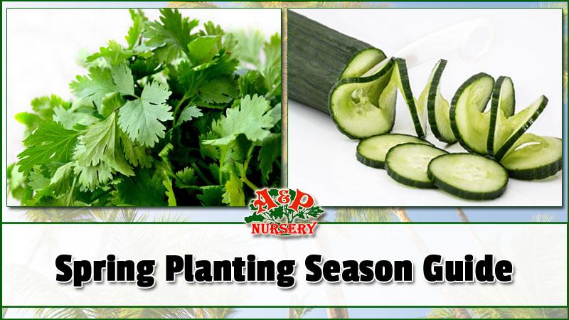 Planting Season Arizona