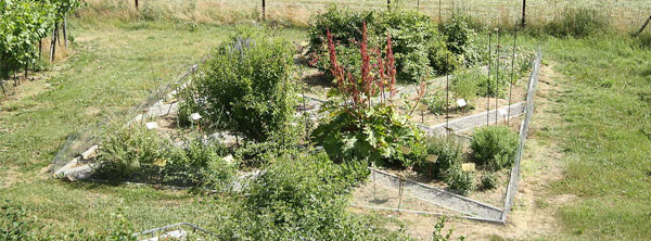 Herb Garden Site Location Arizona