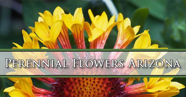 Perennial flowers arizona ap nursery mightylinksfo