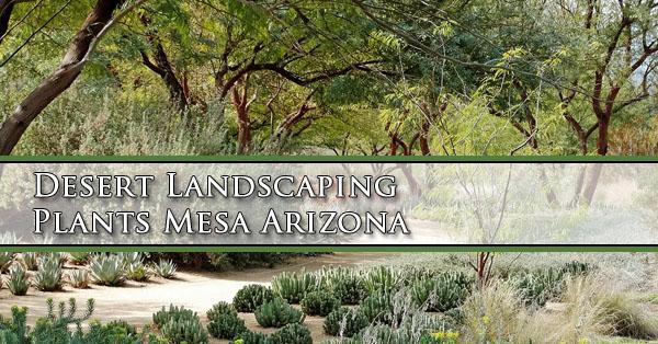 Desert Landscaping Plants Mesa Arizona