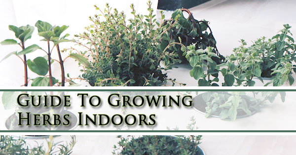 Ap nursery our plant nursery blog - Best herbs to grow indoors ...
