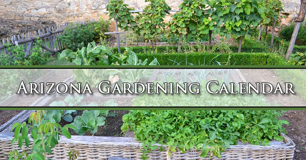 Captivating Arizona Gardening Calendar
