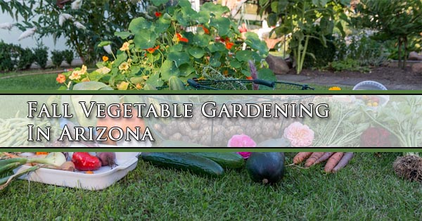 Superbe Fall Vegetable Gardening In Arizona