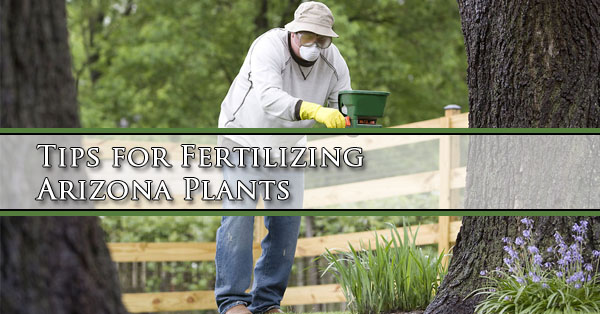 Tips for Fertilizing Arizona Plants