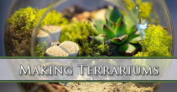 Making Terrariums Mesa AZ