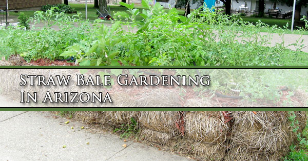 Straw Bale Gardening In Arizona