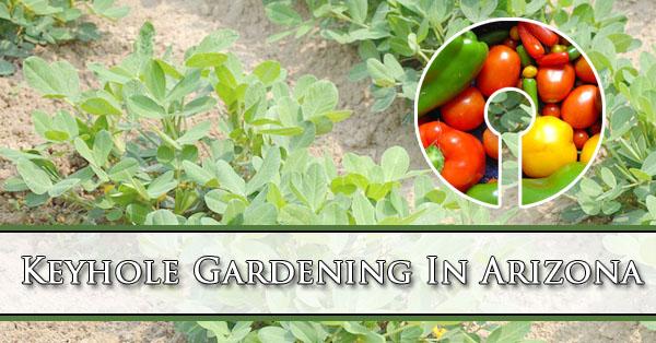 Keyhole Gardening In Arizona