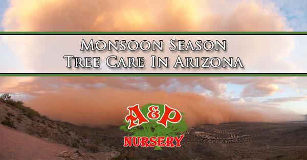 Monsoon Season Tree Care In Arizona
