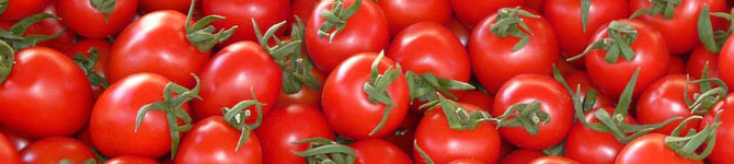 When To Start Growing Tomatoes In Arizona