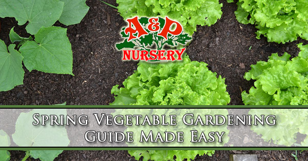 Spring Vegetable Gardening Guide Made Easy
