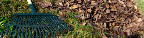 Remove yard debris and leaves