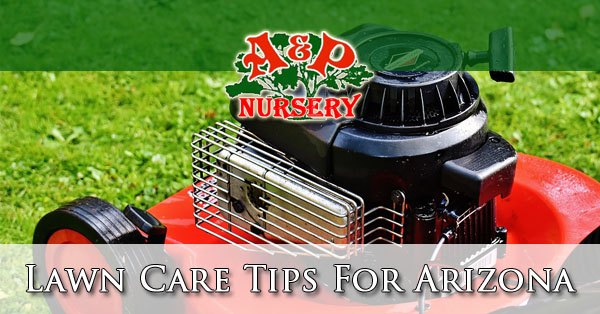 Lawn Care Tips For Arizona