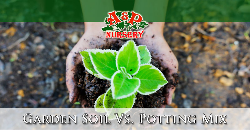 Garden soil vs potting mix differences a p nursery for Topsoil vs potting soil