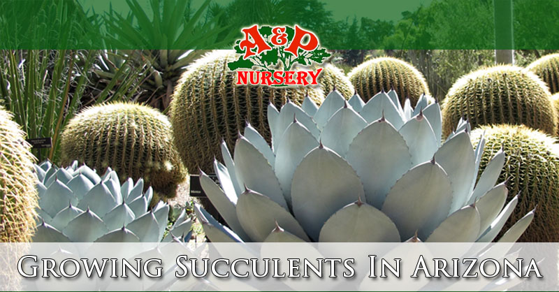unusual phoenix home and garden.  Growing Succulents In Arizona Mesa Gilbert Queen Creek