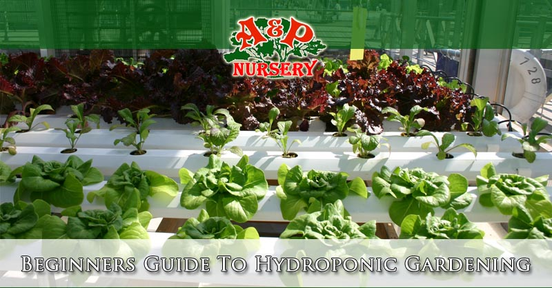 Beginners Guide To Hydroponic Gardening