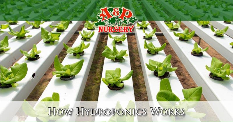 How Hydroponics Works