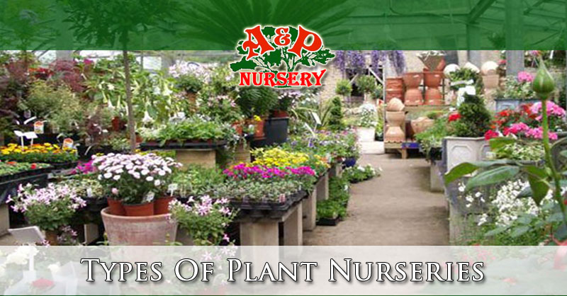 Types Of Plant Nurseries A P Nursery