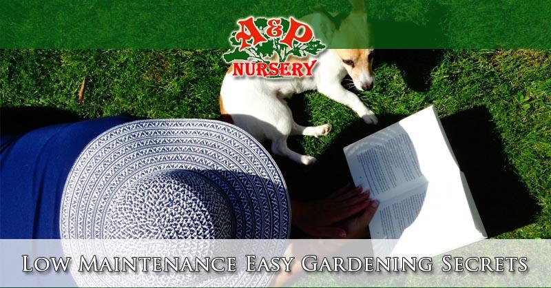 Low Maintenance Easy Gardening Secrets
