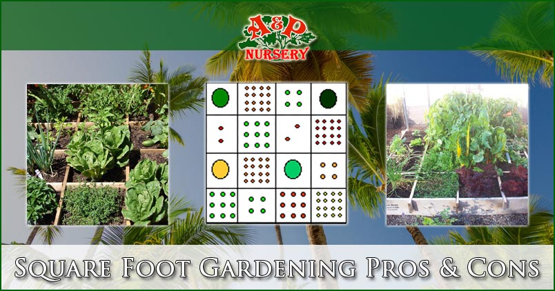 Square Foot Gardening Pros & Cons