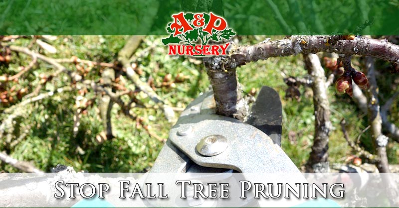 Stop Fall Tree Pruning | Save The Trees!