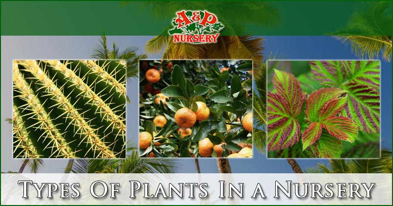 Types Of Plants In a Nursery